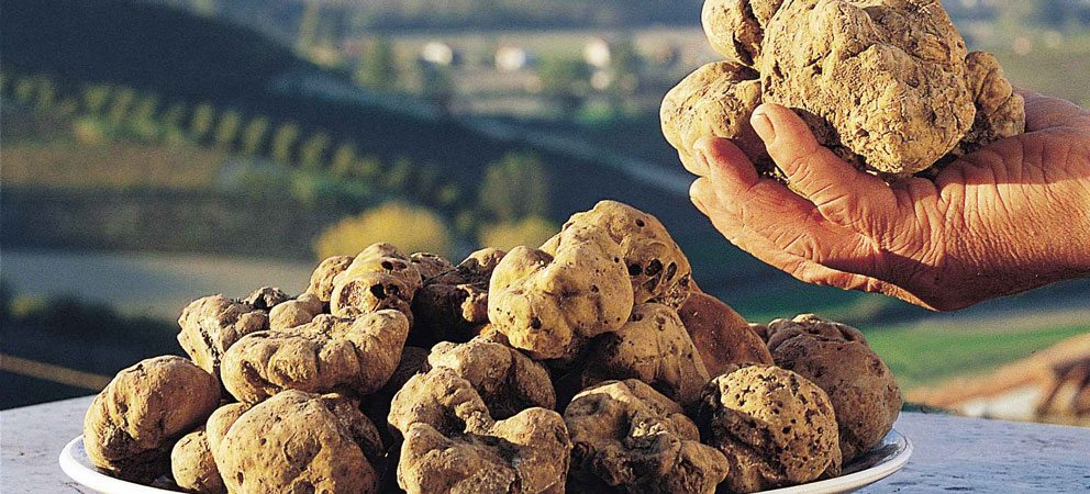 truffleat-ready-to-ship-worldwide-the-next-white-truffle,-starting-october-1,-2020-italian-product-with-alba-certification.